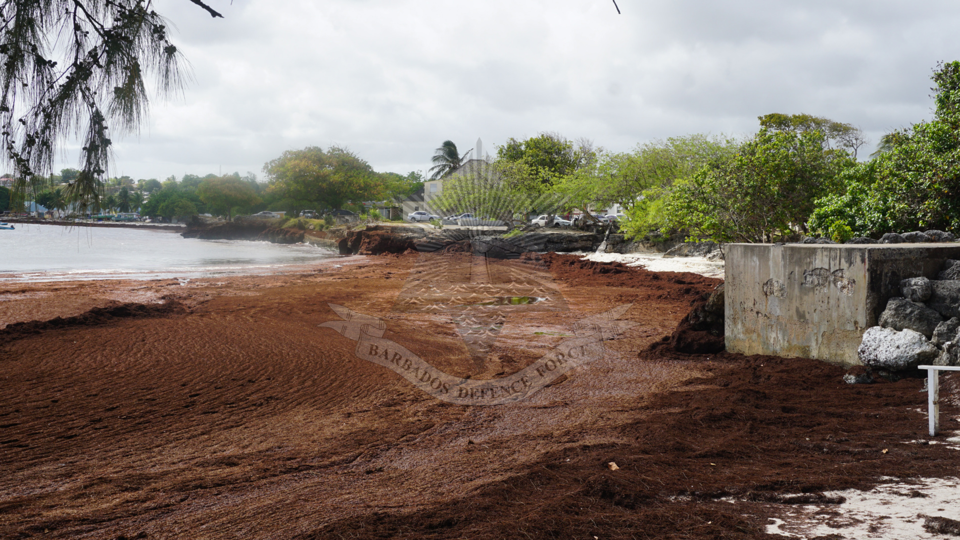 BDF Sargassum Seaweed Programme - The Barbados Defence Force